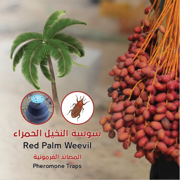 Red Palm Weevil – GUPAP