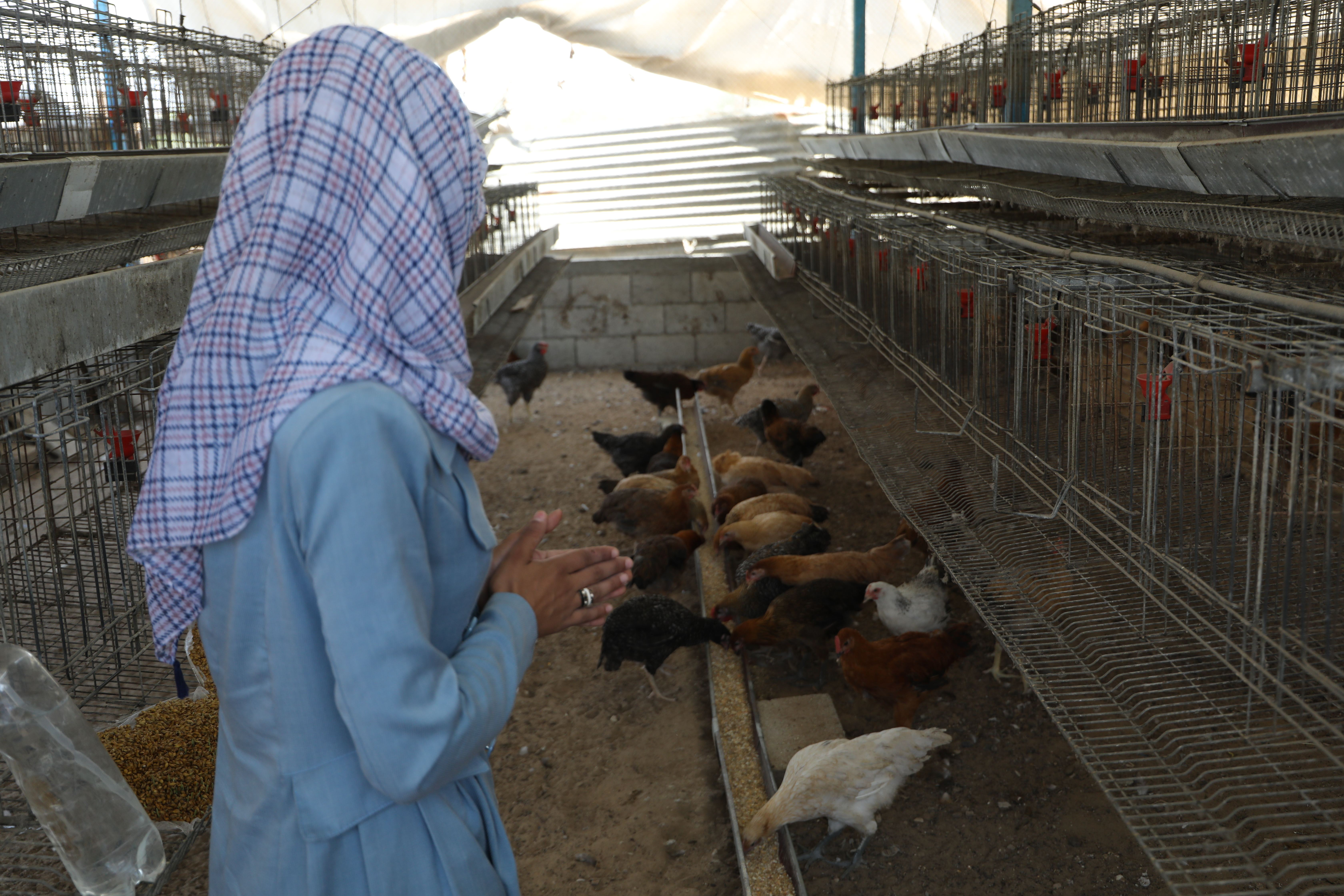 Chicken broilers Small Project